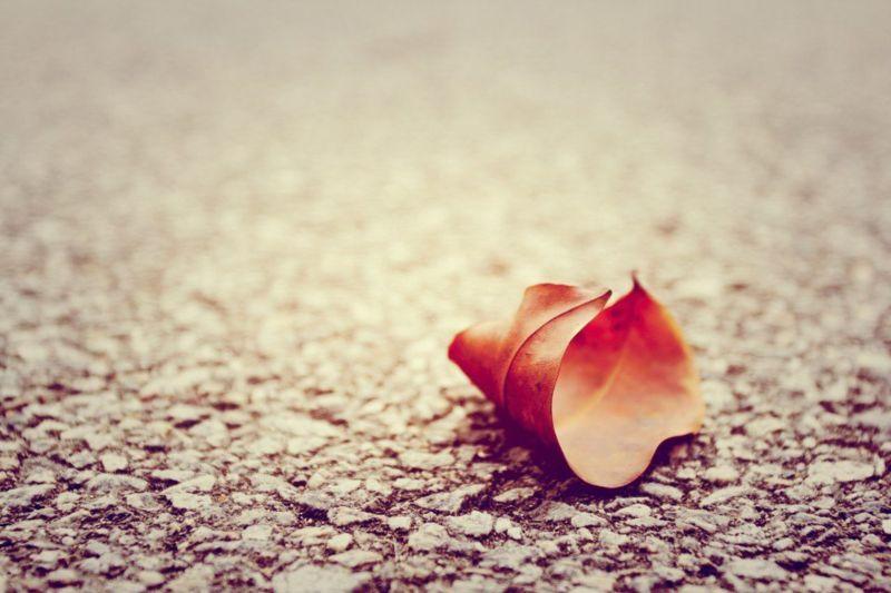 落叶归临安