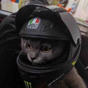 嵊州第一丑猫猫