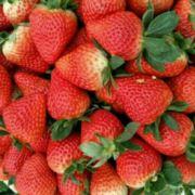 石室宝贝草莓园