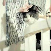 猫猫猫小妞