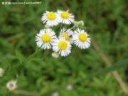 平湖大野花