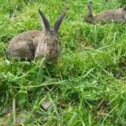 长兴兔肉中心