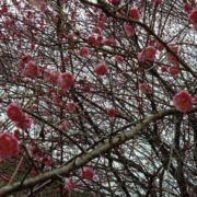 春色满园303