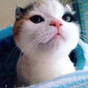 猫huihui