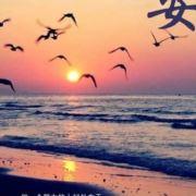 晨曦飞翔的海鸥