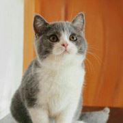 猫之屋猫舍
