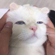 生活小猫咪
