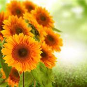 花儿朵朵开3额