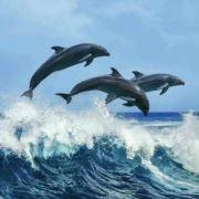 海豚游泳培训