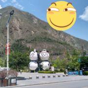 汶川县羌山蜂蜜