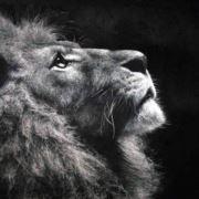 孤独的狮子818