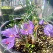 潜江油焖龙虾